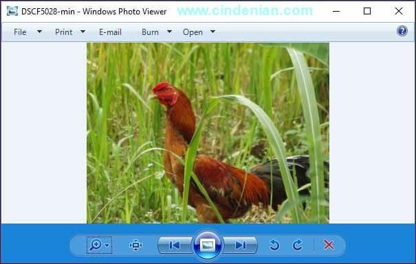 Cara Mengembalikan Windows Photo Viewer di Windows 10